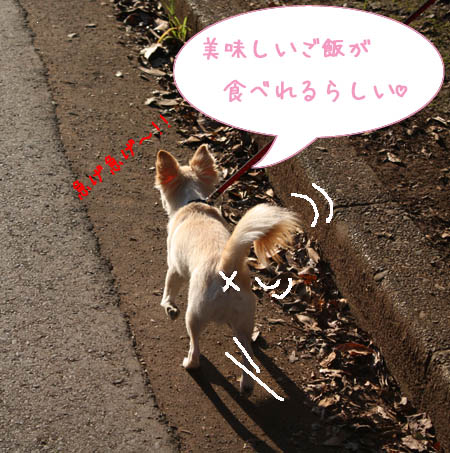 動物愛護2008 1