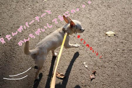 動物愛護2008 2