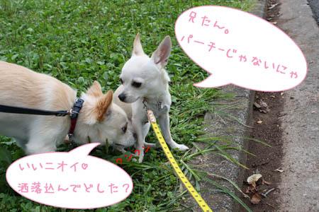 動物愛護2008 3