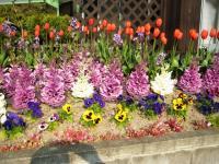 09年 多田羅さんのお宅の花
