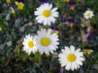 09年我が家の花2