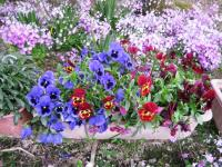09.4.14 隣の花1