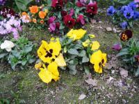 09.4.14 隣の花4