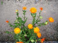 09.4.14 隣の花7