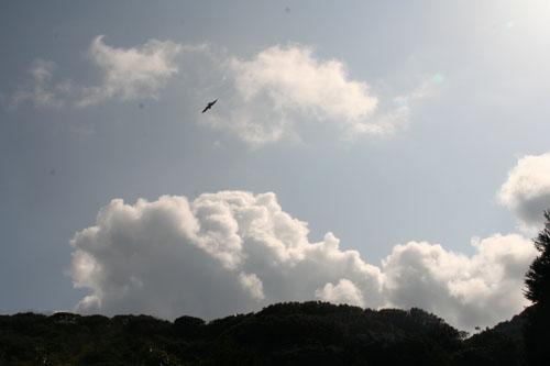河津桜h.24.3.10 022