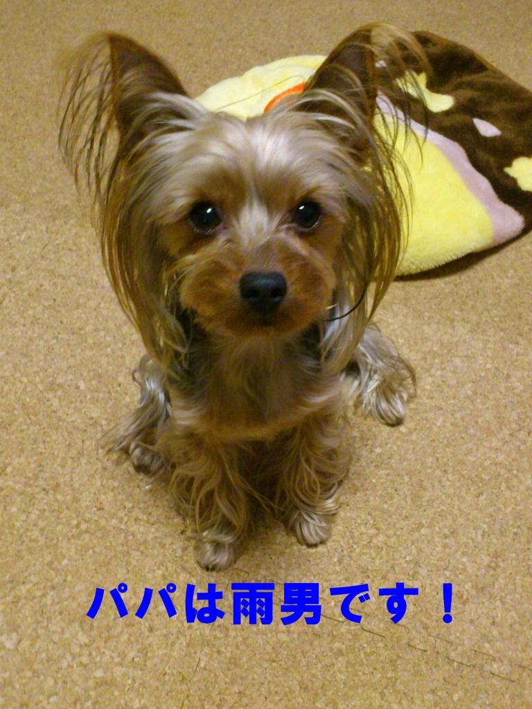DSC_1238_20120310101607.jpg