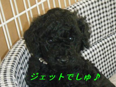 2009_0915(043)_convert_20090915220357-1.jpg