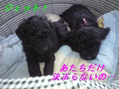 2009_0915(097)_convert_20090915221154-1.jpg