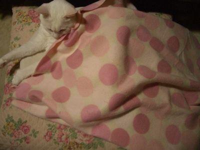 毛布かけるみるく