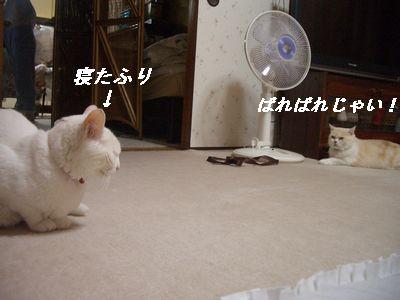 ばればれじゃい!