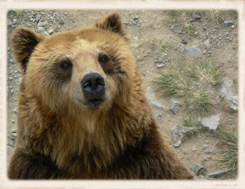 エサ待ち熊さん