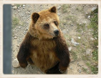 おすわり熊さん