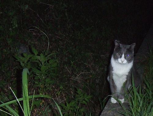 夜の散歩!?