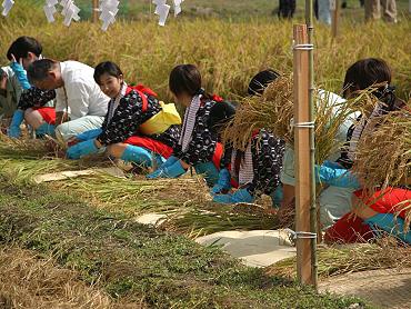 献穀米抜穂式-7
