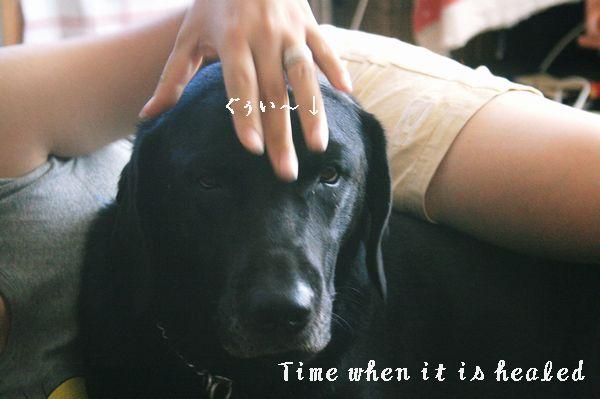 癒しの時間2