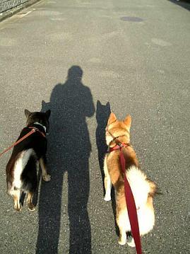 散歩3ショット3