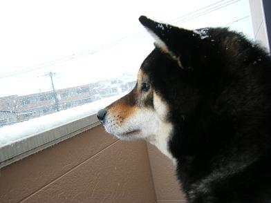 雪ですよ4
