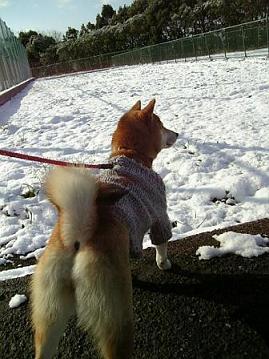 雪の日②2