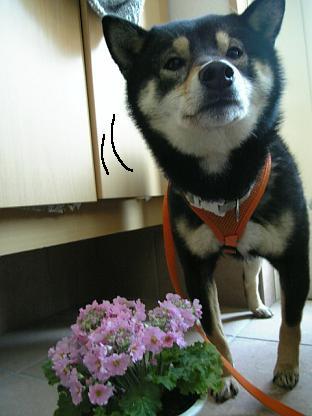 花とミツルリ1
