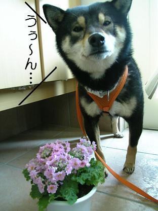 花とミツルリ3
