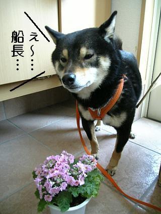 花とミツルリ4