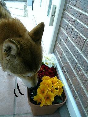 花とミツルリ5