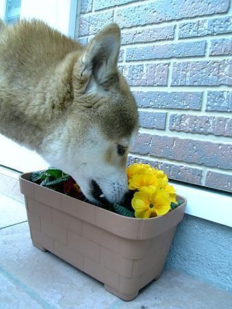 花とミツルリ7