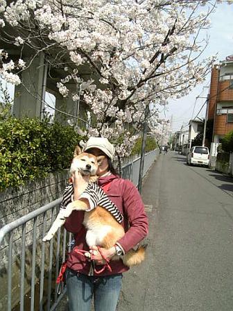 お花見への道。③2