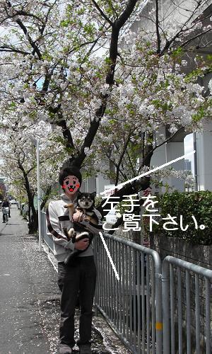 お花見への道。③9