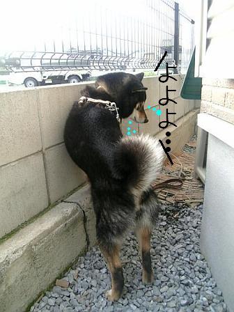 お散歩行くよ!2