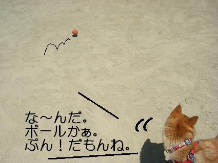 な~んだ、ボールか・・・1