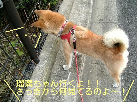 のぞき屋瑠璃ちゃん1