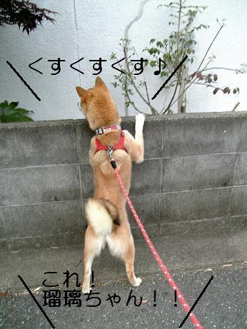 のぞき屋瑠璃ちゃん3