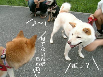 夢の共演!5
