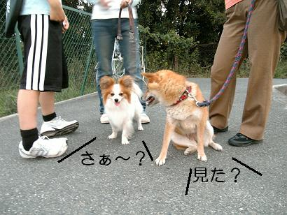 夢の共演!6