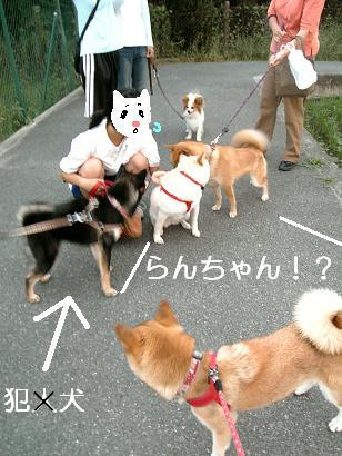 夢の共演!7