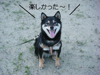 散歩夕13