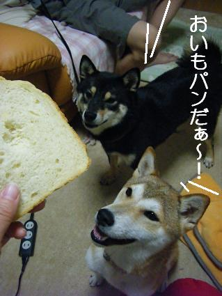 BDPパン!3