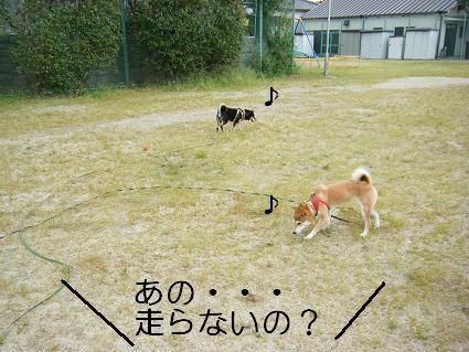 走ろうよ!1