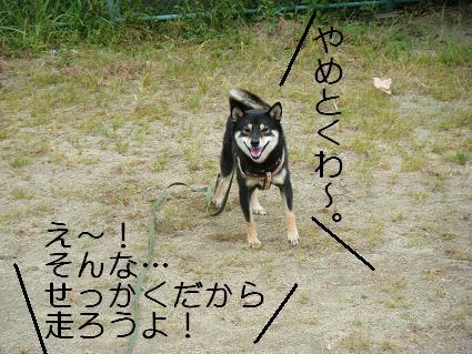 走ろうよ!3