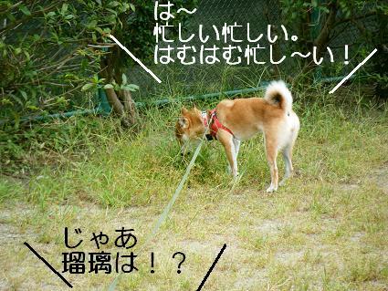 走ろうよ!5