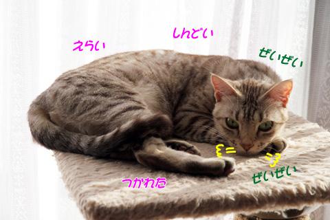 miu2010d021.jpg