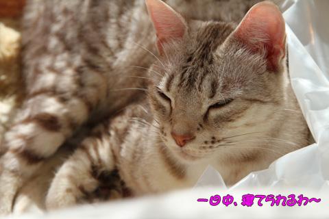 miu2010d132.jpg