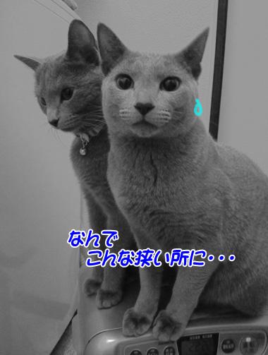 miu2010d142.jpg