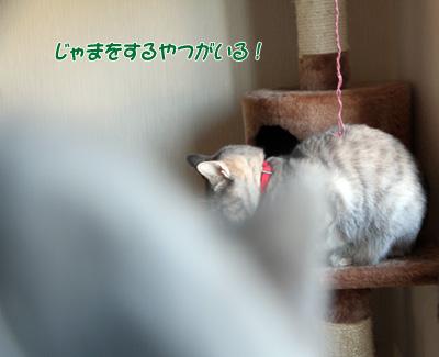 miu2010d171.jpg