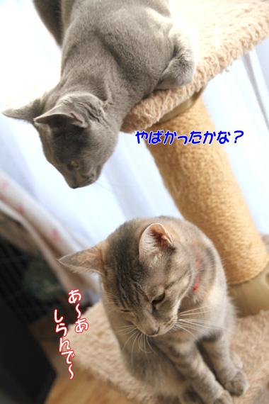 miu2010n075.jpg