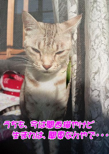 miu2010n104.jpg