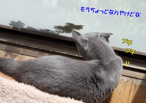 miu2010n121.jpg