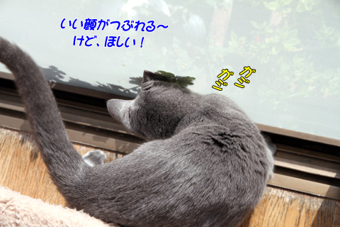 miu2010n123.jpg