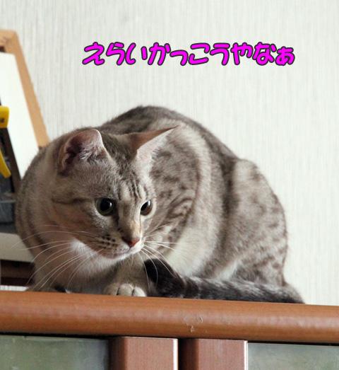 miu2010n181.jpg